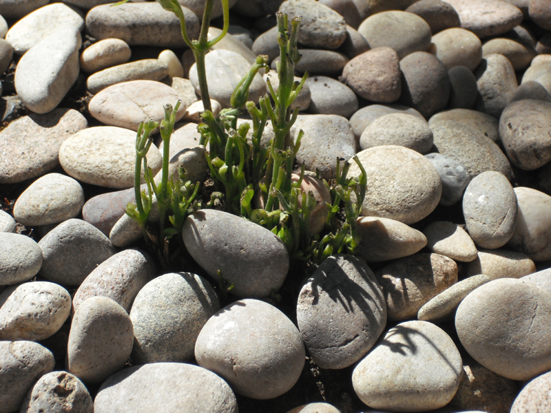 Clem in stones reduced.jpg