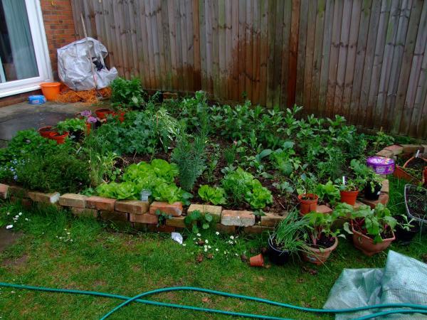 Lads garden
