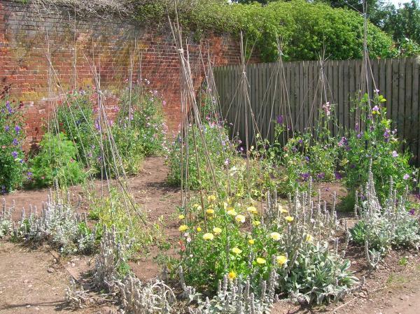 Shugborough Walled Garden iv