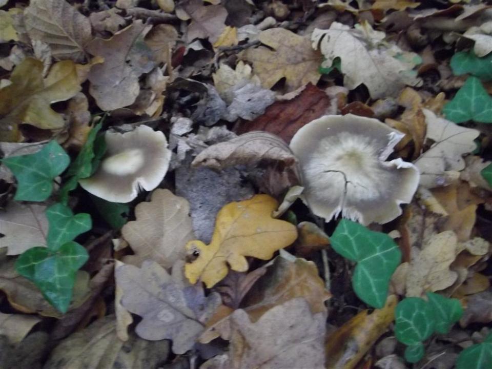 Fungi Forage Album 1