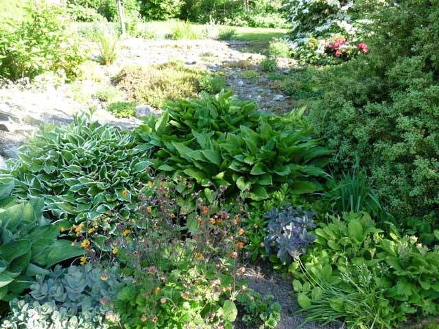 Palustris's Garden June 2013