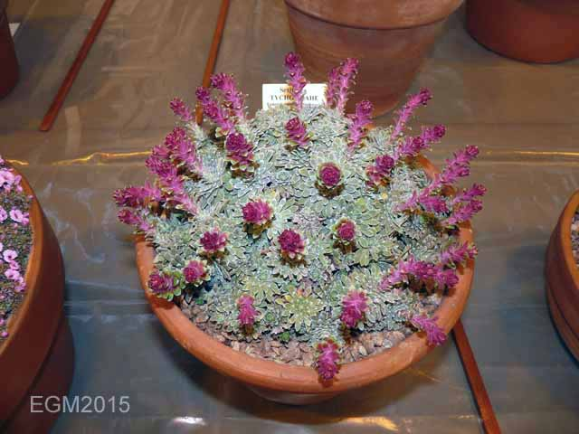 Loughborough AGS Show March 2015