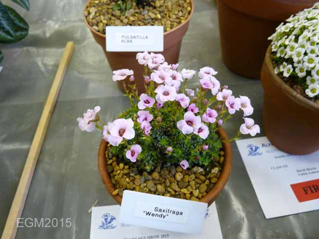 Kendal AGS Show