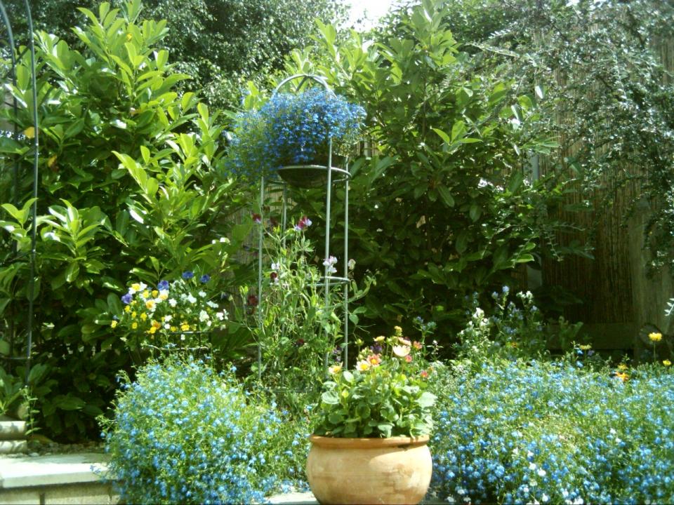 Clanless garden pics July 2016