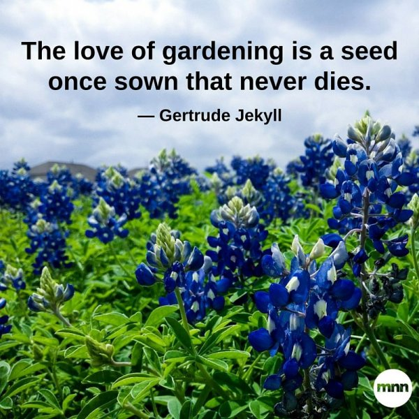 FAVORITE GARDEN QUOTES