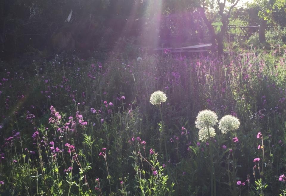 Meadow timings